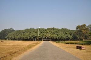 Acharya Jagadish Chandra Bose Indian Botanic Garden Howrah