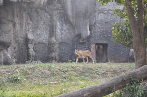 Alipore Zoological Garden   Kolkata