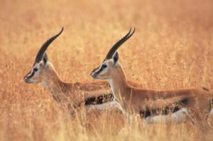 Alisagar Deer Park 1