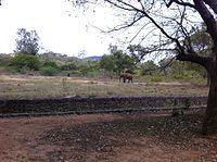 An Elephant in Arignar Anna Zoological Park Vanadalur Chennai India