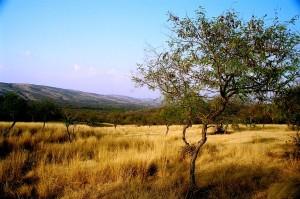 Aravali range Ranthambhore