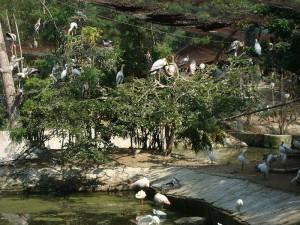 Birds Enclosure in Vandaloor Zoo