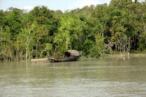 Boat trees and water in Sundarbans