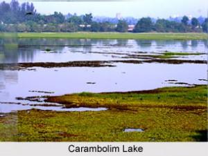 Carambolim Lake g