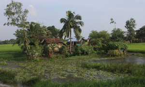 FarmHouseSunderban
