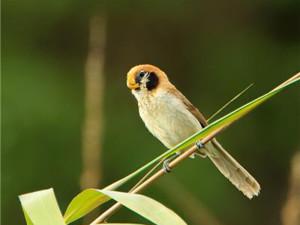 Ghosu Bird Sanctuary