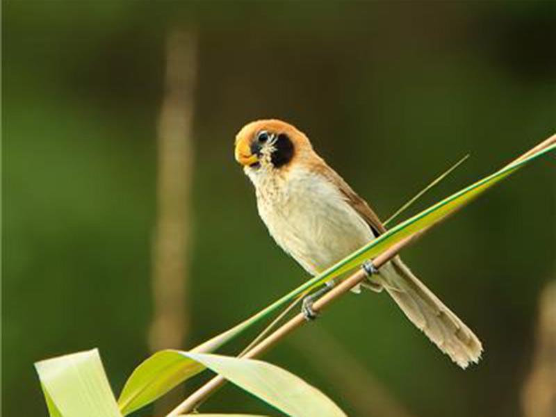 Ghosu-Bird-Sanctuary