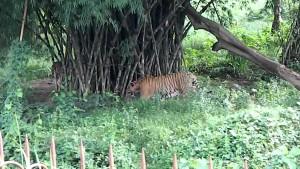 Gumti Wildlife Sanctuary1