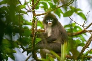 Gumti Wildlife Sanctuary3