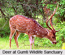 Gumti_Wildlife_Sanctuary__South_Tripura_District__Tripura_1