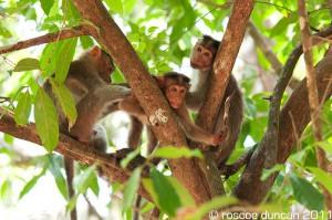 India Travel Cotigao National Park