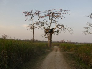 Inside Kaziranga national park