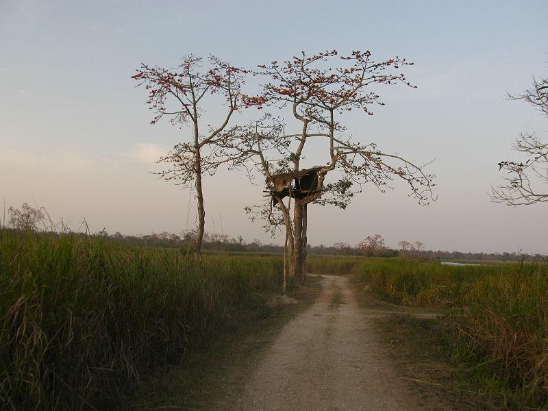 Inside_Kaziranga_national_park