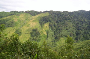Jhum cultivation in Nokrek Biosphere Reserve Meghalaya India Northeast India 2004