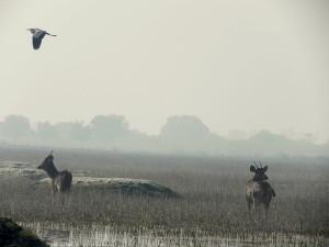 Keoladeo Ghana National Park Bharatpur Rajasthan India