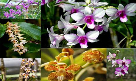 Khonghampat-Orchidarium