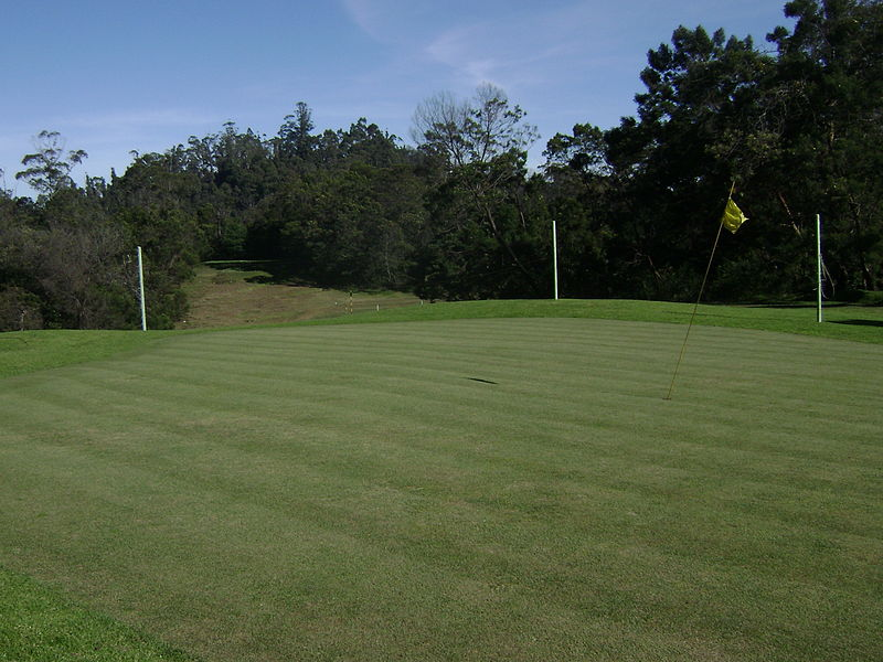 Kodai_GC_groomed_green