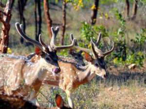 Krishna Wildlife Sanctuary 1