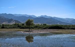 Leh Valley Ladakh 1