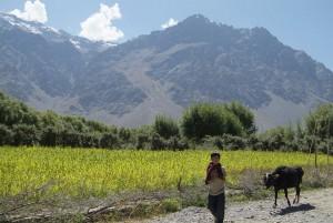 Leh Valley Ladakh 2