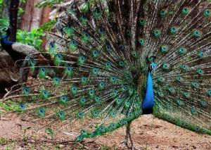 Mrugavani National Park @ Chilkur1