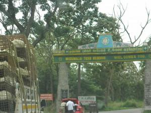 Mudumalai Tiger reserve Tamil Nadu India