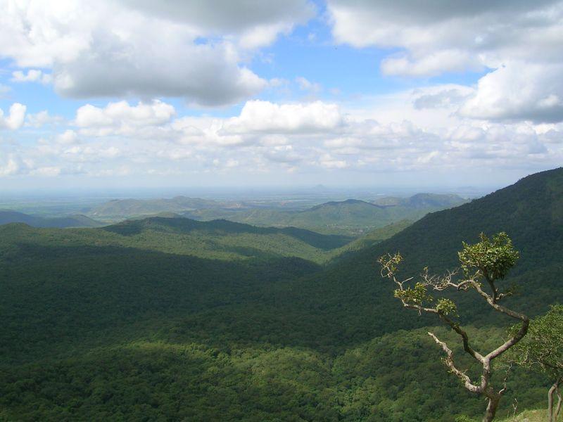 Wildlife Mudumalai National Park in Tamilnadu