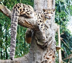 Namdapha National Park Source telegraphindia