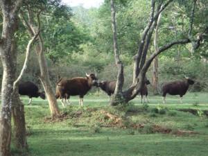 Nameri National Park Source tezpuronline