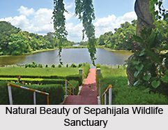 Sepahijala_Wildlife_Sanctuary_Tripura_1