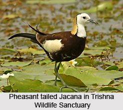 Trishna_Wildlife_Sanctuary_Tripura_1