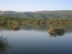 Water body within the Sariska Reserve Rajasthan