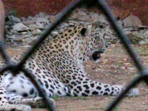 Zoo 85