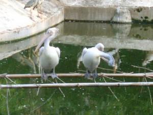 Zoo 91