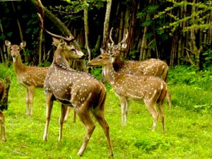 alisagar deer park 3