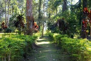 botanicalgarden shillong