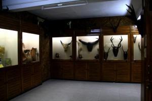 bull heads horns at museum