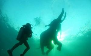 diving with rajan1