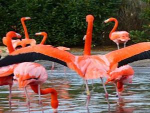 indira-gandhi-zoological-park-1