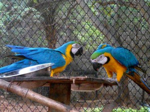 indira-gandhi-zoological-park-10