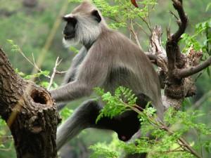 indira-gandhi-zoological-park-11