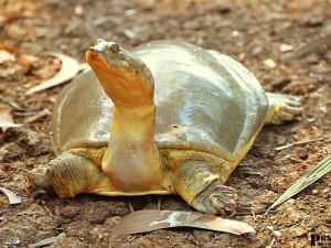 indira-gandhi-zoological-park-12