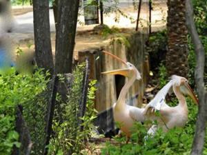 indira-gandhi-zoological-park-3