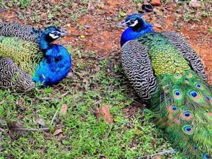 indira-gandhi-zoological-park-4