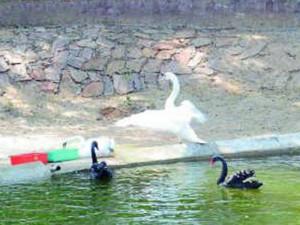 indira-gandhi-zoological-park-6