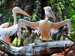 indira gandhi zoological park 7