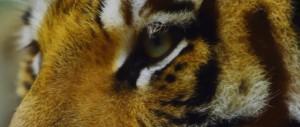 jannaram wildlife1