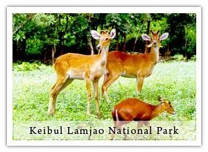 keibul lamjao park