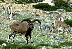 khangchendzonga national park3