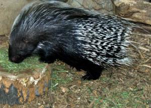 mammals01 (1)
